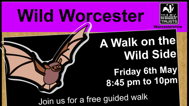 Wild Worcester: A Walk on the Wild Side